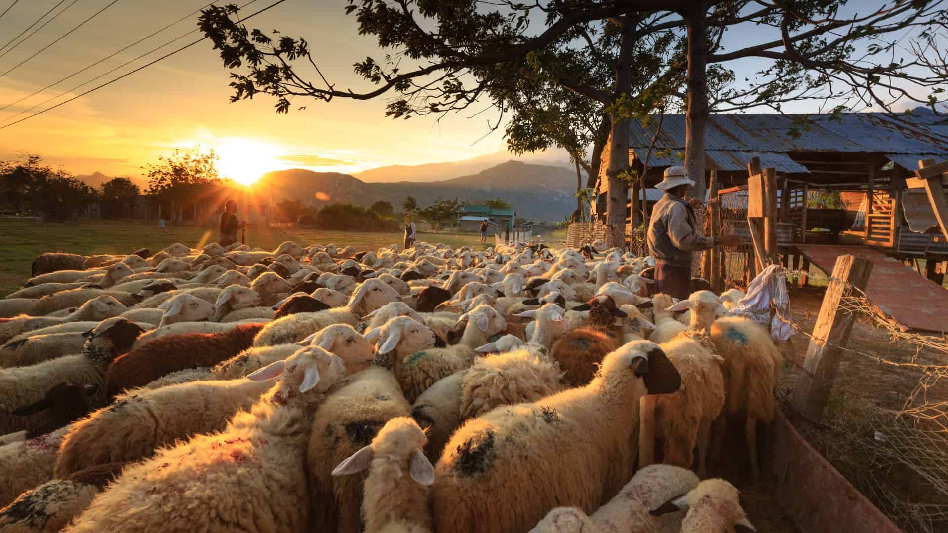 Ignore the Noise and Shepherd the Flock Among You