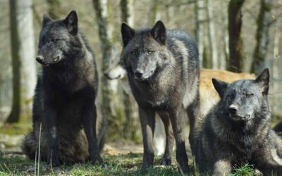 When the Wolves Come (2 Timothy 2:14-19)
